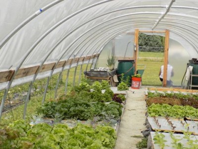 How to Build A Greenhouse   Free Greenhouse Plans   Bootstrap Farmer High Tunnel Greenhouse