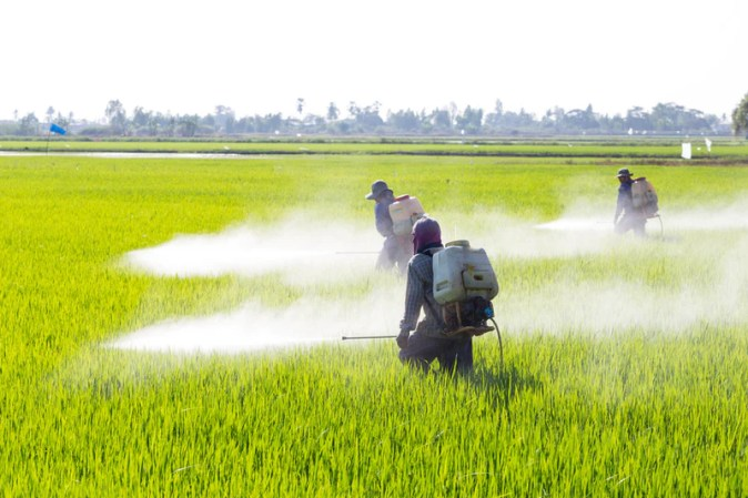 Image result for pesticide