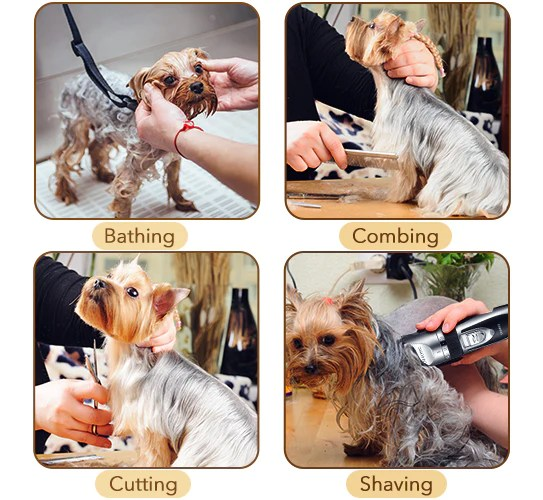 Pet Shaving Instructions