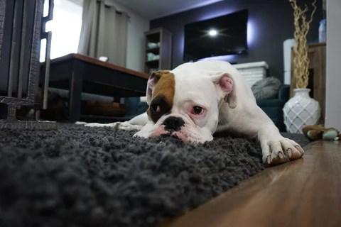 Dog Alone
