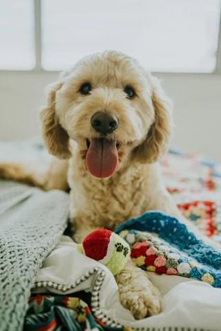 Dog playing toy