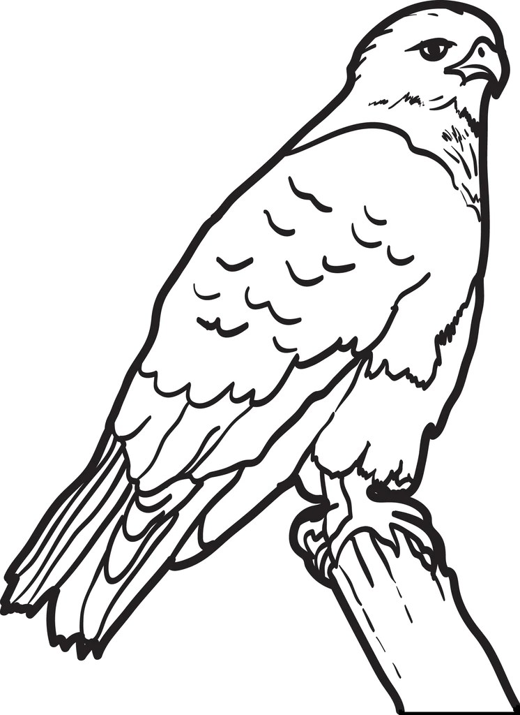 FREE Printable Hawk Coloring Page For Kids SupplyMe