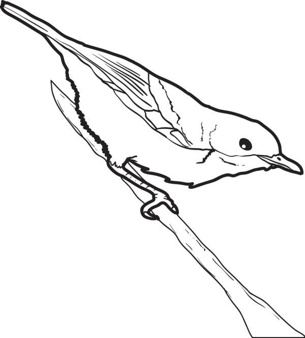 robin coloring page # 50