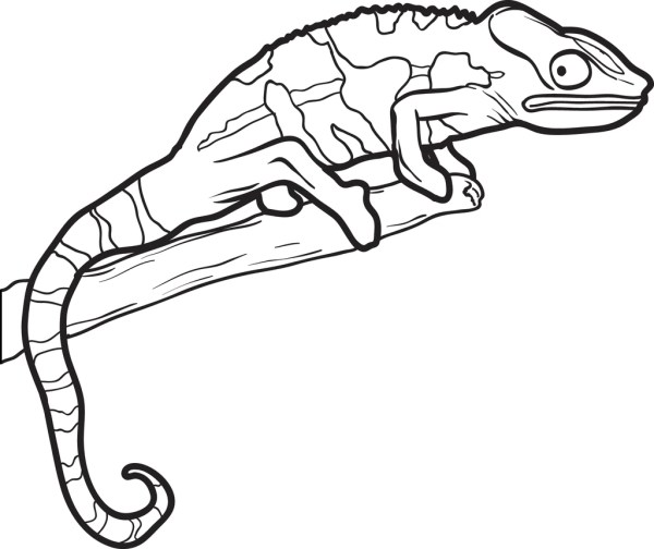 lizard coloring page # 9