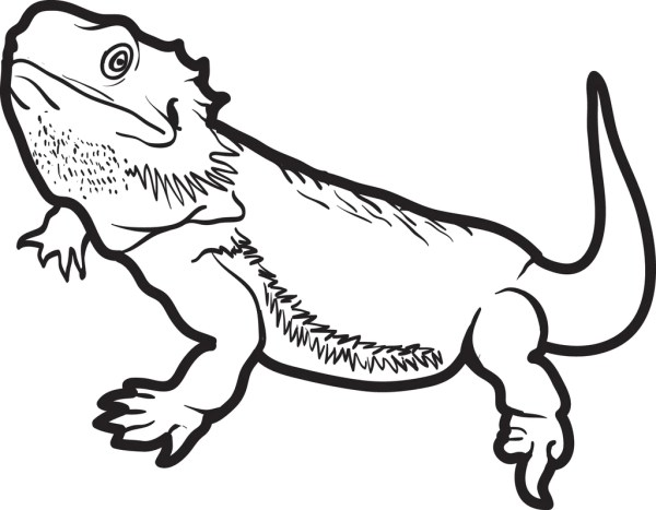 lizard coloring page # 6