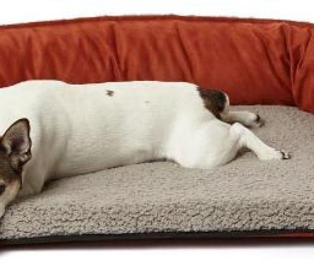Easy Dog Bed For Dogs Of All Sizes