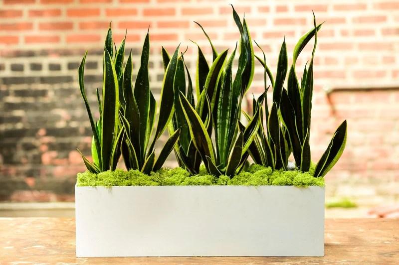 Rectangular Planter Tall