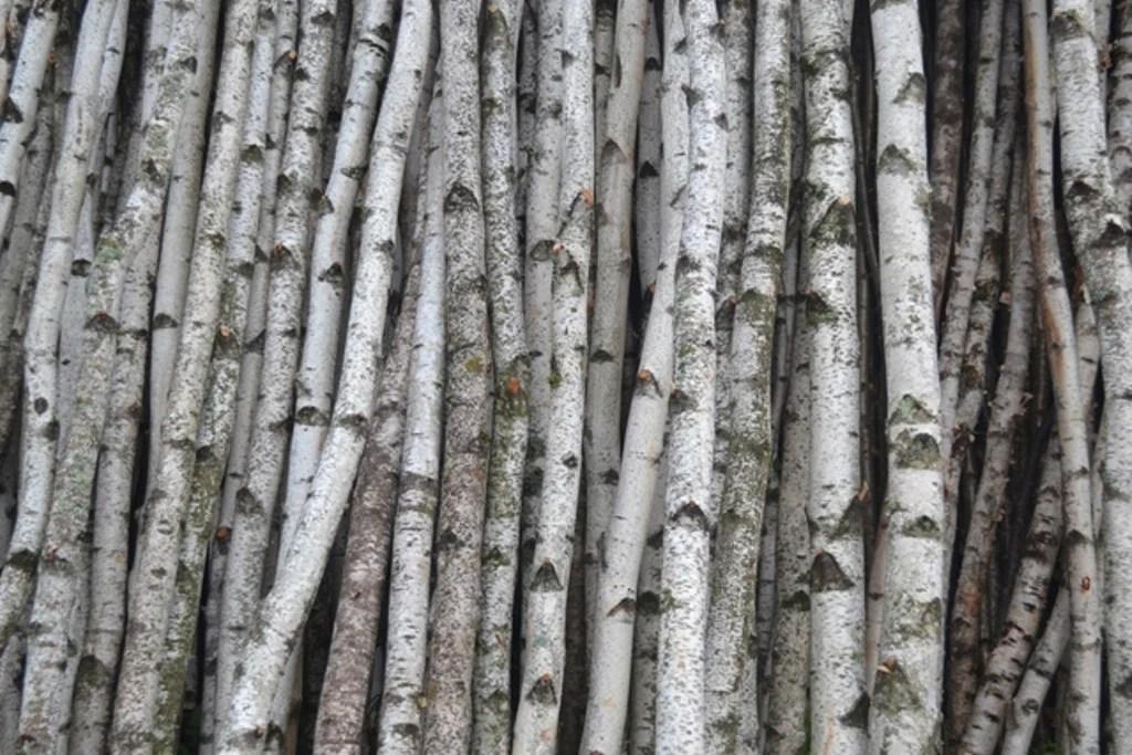 White Birch Poles Wholesale Rustic Decor