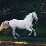 12 Rarest Horse Breeds In The World Black Heart Equestrian