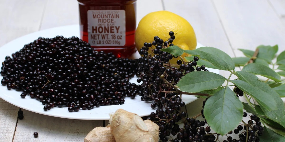 How Much Elderberry Should I Take Norm S Farms