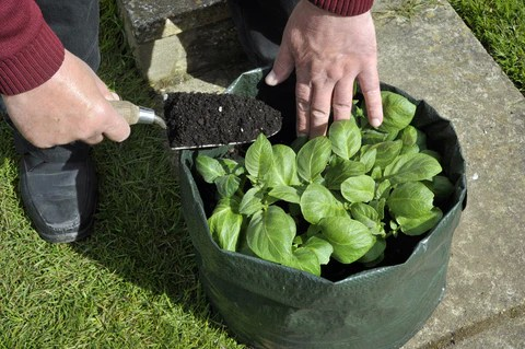 Fertilizing Plants in a Grow Bag