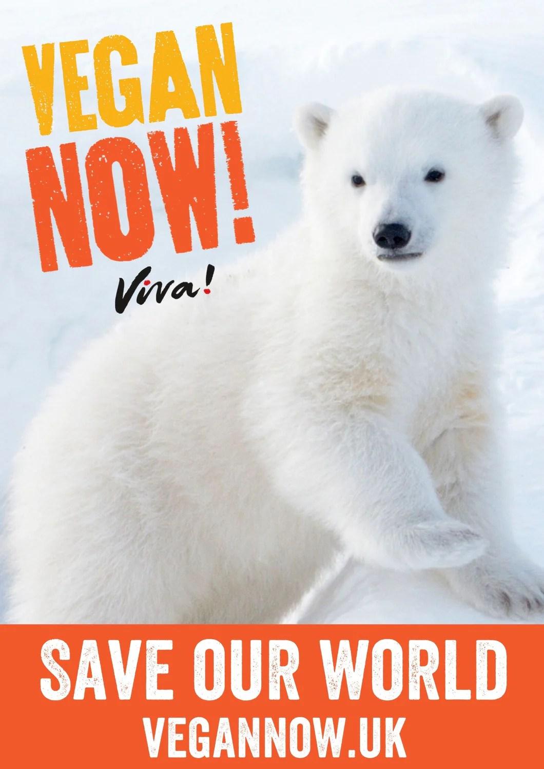 vegan now polar bear poster