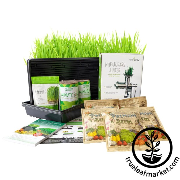 Wheatgrass Kit W Hurricane Grass Wm 800x