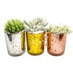 Pots For Succulent Growing Succulents In Containers Succulent Home Decor Ideas Succulents Box