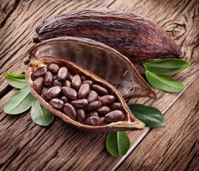 「cocoa tree」的圖片搜尋結果