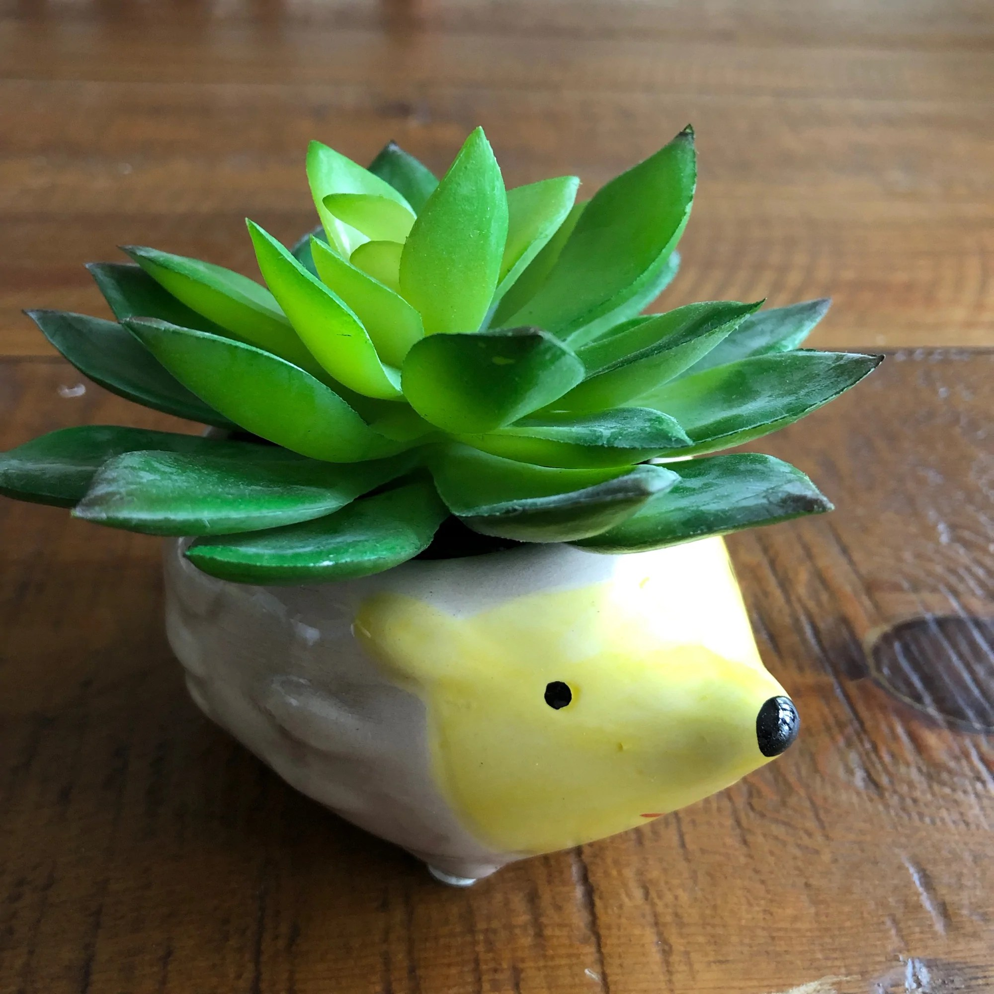 Adorable Hedgehog Succulent Plant Pot Exquisite Succulents