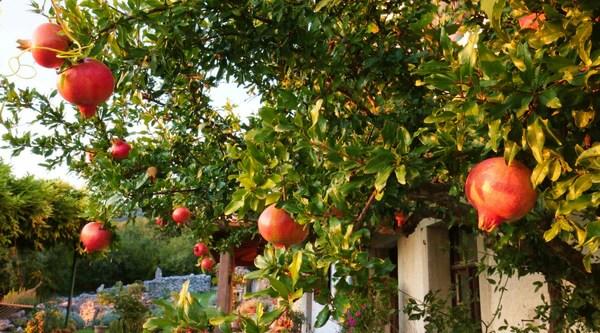 Beautiful Bonsai Trees & Low Maintenance House Plants