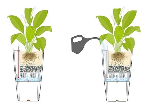Self Watering Pots Hariththarang