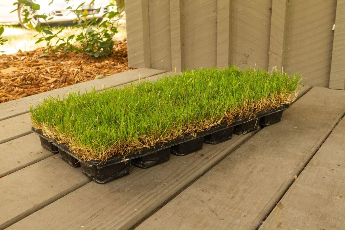 Products Bermuda Lawn Fertilizer