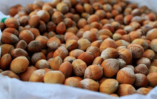 Hazelnuts a fantastic plant based protein