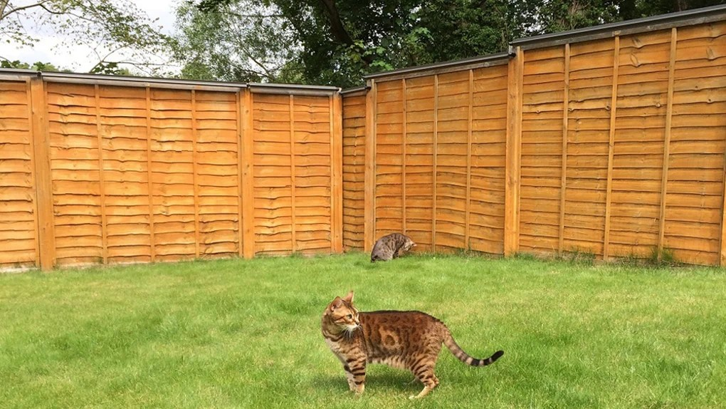 revolutionary cat proof fence rollers