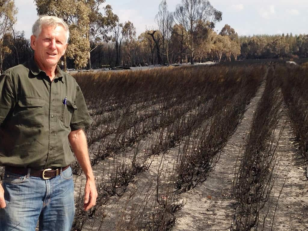 John Day - The Paperbark Co. Plantation Burnt - Lewin & Reilly Organic Skin Care NZ Australia