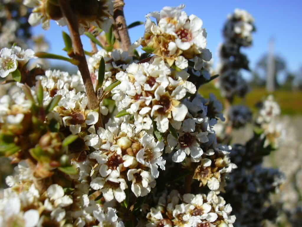 Lewin & Reilly Organic Skin Care NZ Australia - Fragonia