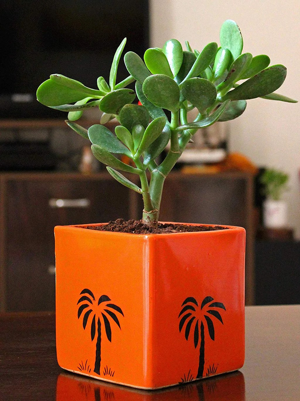 Buy Live Natural Indoor Plants Online India Think Green Live Green Rollingnature