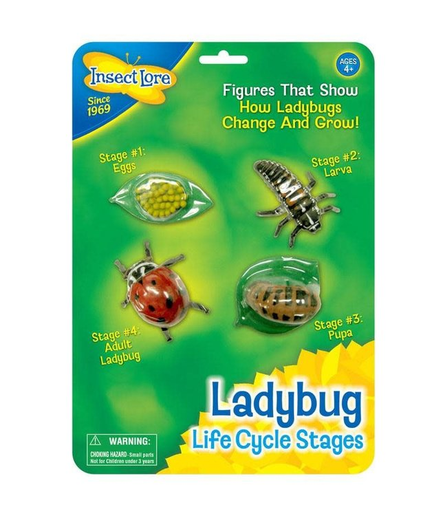 Ladybug Life Cycle Stages Ispark Toys