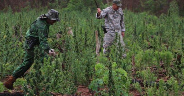 """«El mapa y la ruta"""" de la marihuana en el Paraguay"""