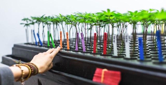 Veritas Fine Cannabis - Denver, CO