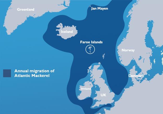 atlantic mackerel migration