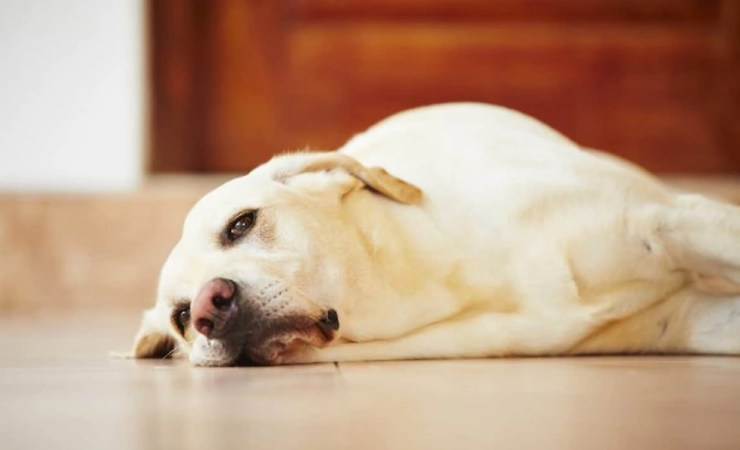 5 Ways to Stop Your Dog From Getting Bored at Home