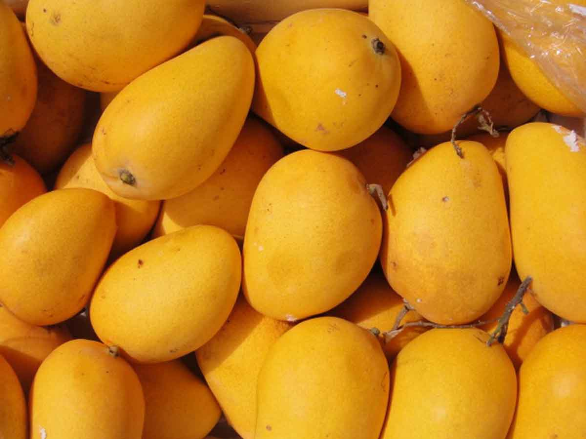 Mango King Of Fruits Loved By Kings And Commoners
