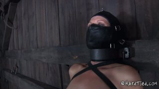 Tatted brunette Hailey Young is showing her skills in BDSM games image