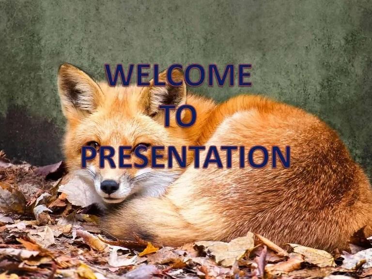 Bacterial Diseases Of Foxes