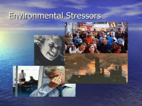 Image result for Environmental Stressor