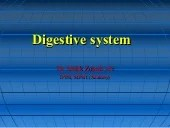 Anatomy & Physiology Lecture Notes - Digestive system