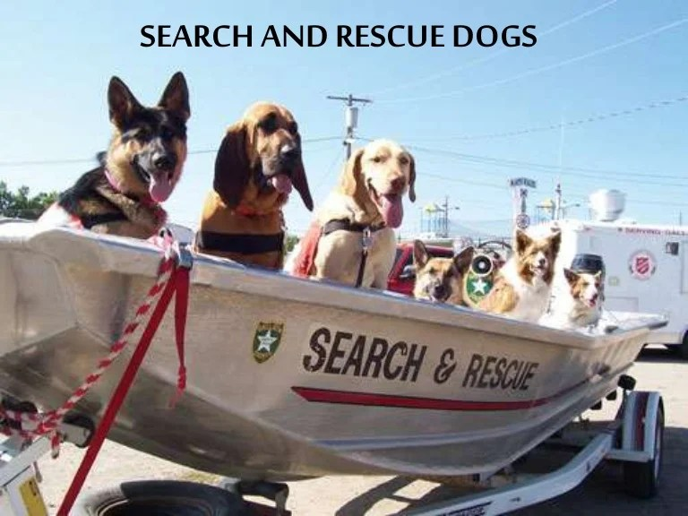 Image result for search and rescue dogs