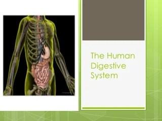 'human digestive system' on SlideShare