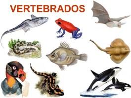vertebrados 101128101700 phpapp02 thumbnail 4 - Animales Vertebrados Definición