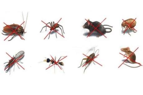 Pests Types List
