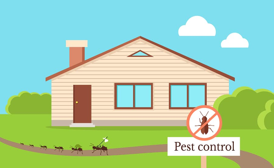 termite barrier systems featured image
