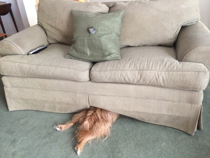 http://happyplace.someecards.com/dogs/15-photos-that-prove-dogs-can-fall-asleep-anywhere/