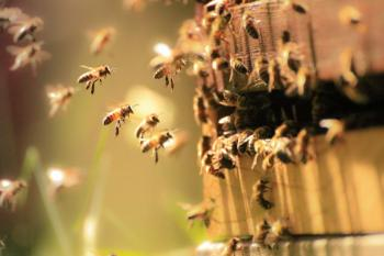 Man dies in Trans Nzoia after bees invade home