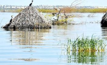 Displaced locals in fear of crocodiles as lake swells