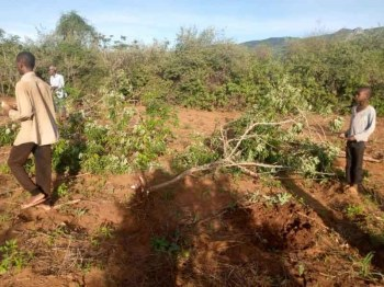 Elephants and buffaloes invade Taita Taveta homes