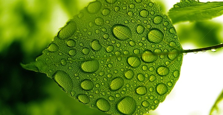 Green_leaf_with_water_drops_wallpaper