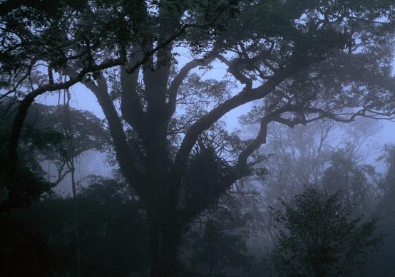 hutan-gelap-gelita