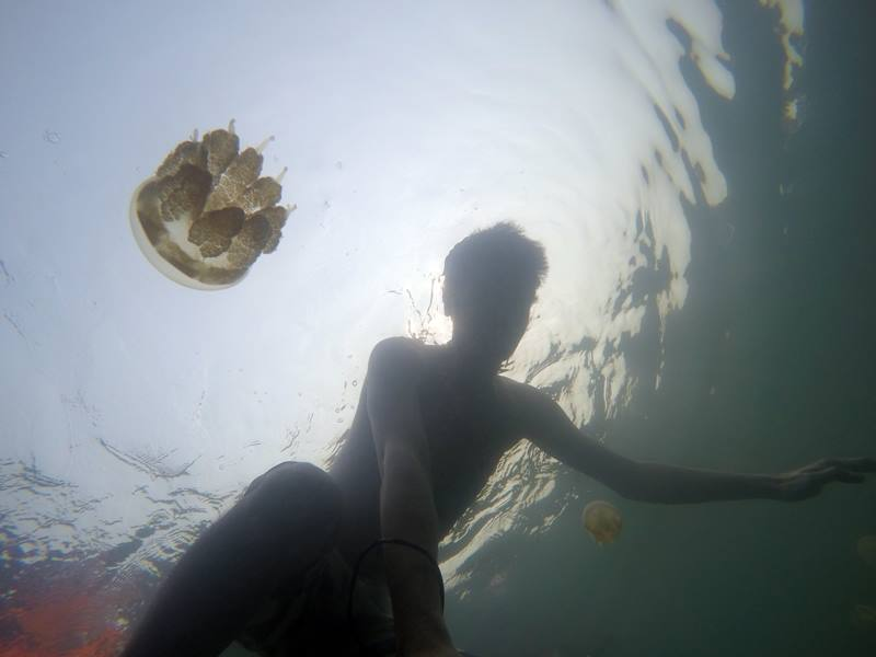 Akhirnya! Selfie bareng Ubur-ubur Danau Kakaban!